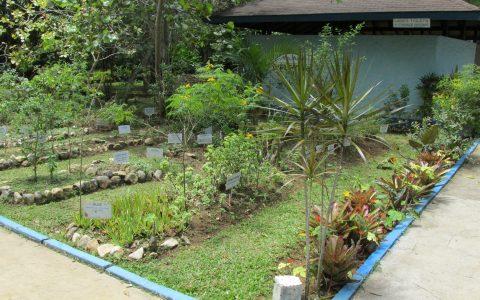 Herb Garden 1
